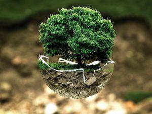 Det ekologiska behovet